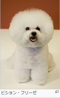 パクソジュン 愛犬